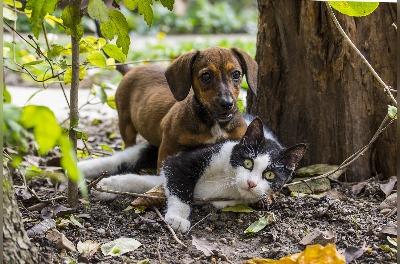 Huisdieren blog